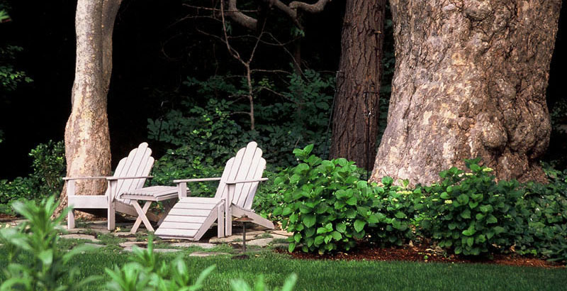 Relaxing sitting area under sycamore trees